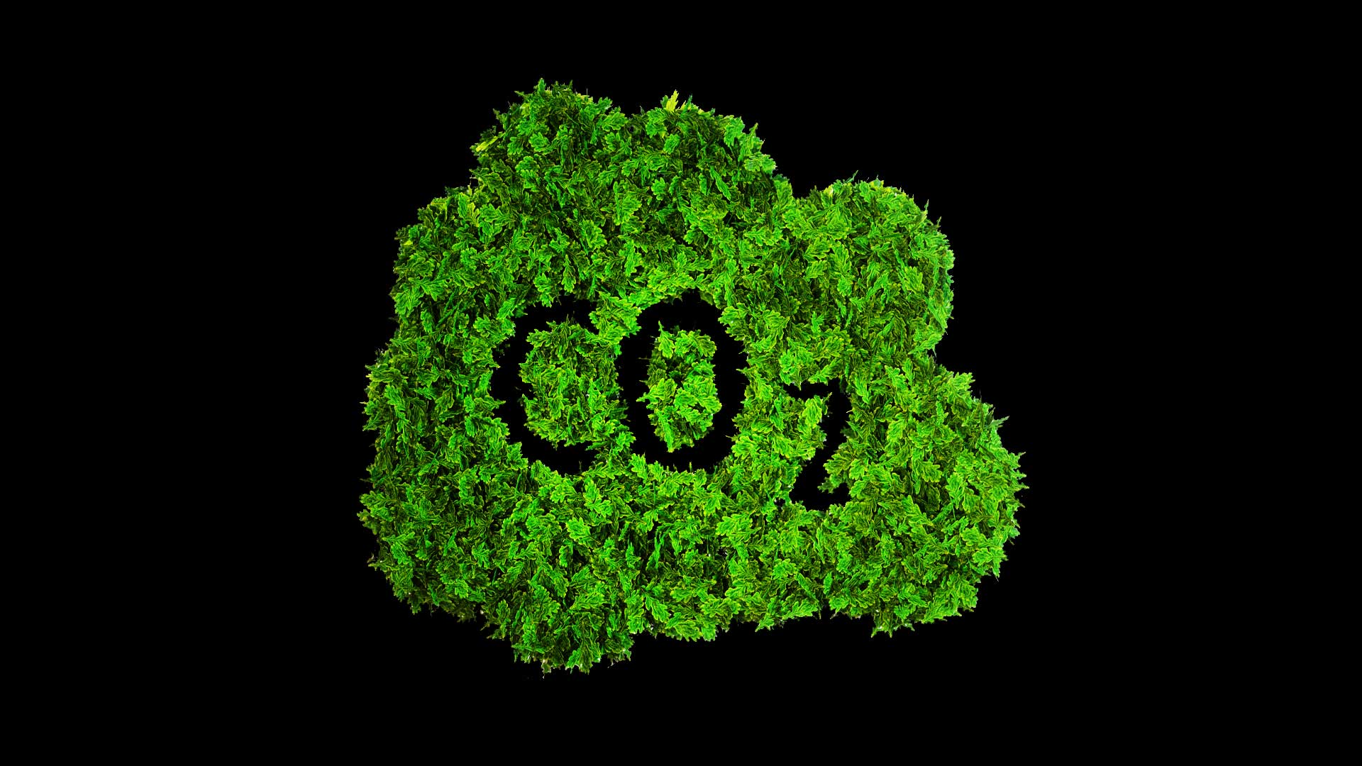 CO2 green leaves with black co2